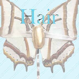 Real Butterfly Wing Hairpin