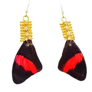 Real Butterfly Wings - Butterfly Wing Earrings jpeg.