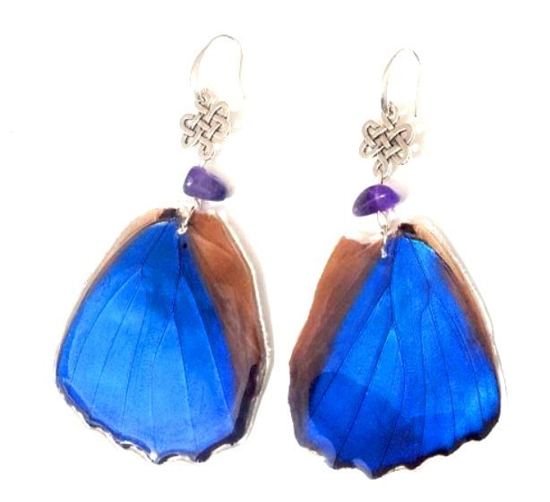 real butterfly wing earrings jpg.