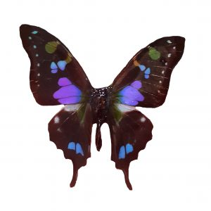 Real Butterfly Wing Jewelry - Butterfly Magnet