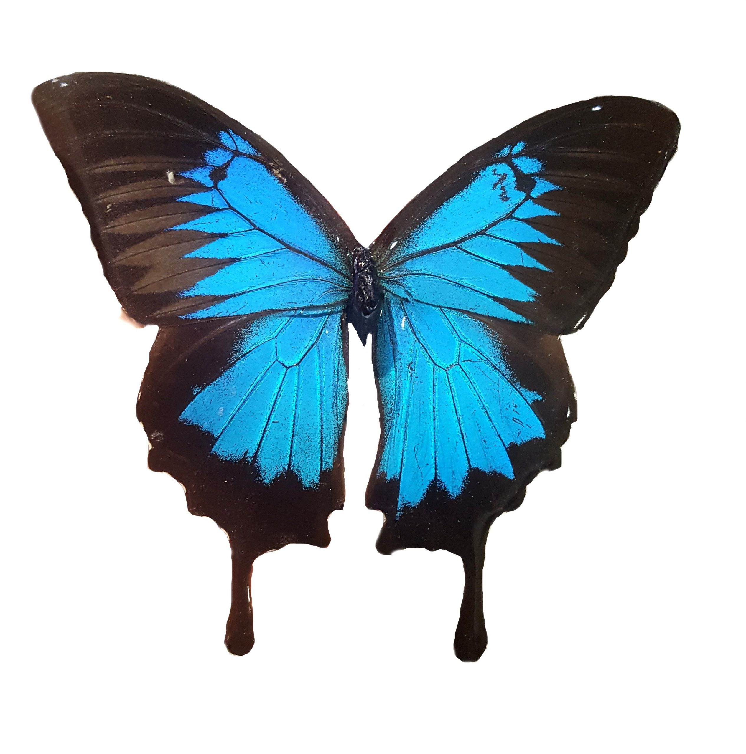real butterfly fridge magnet jpg.