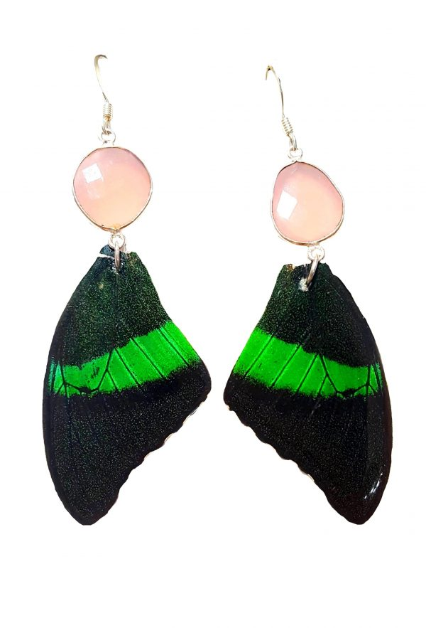 real butterfly wing jewelry earrings jpg.