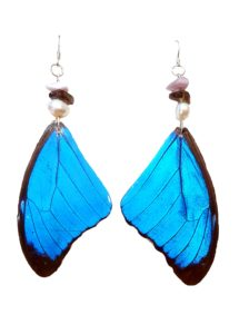 blue morpho, butterfly wing earrings, real butterfly wing jewelry jpeg
