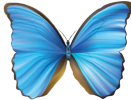 The Blue Goddess Co Buy Real Butterfly Jewelry